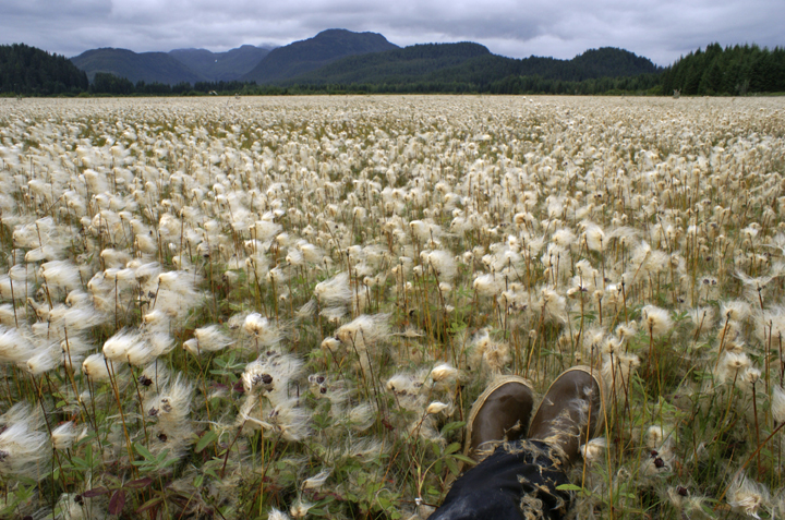 Two shoes can be seen in the bottom of the frame.  The photographer is obviously surrounded by tall, waving grasses, tufted by white and blowing in the wind.